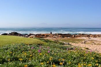 Flora of the Mossel Bay coastline, Garden Route